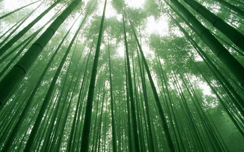 invest like how you would grow a bamboo tree